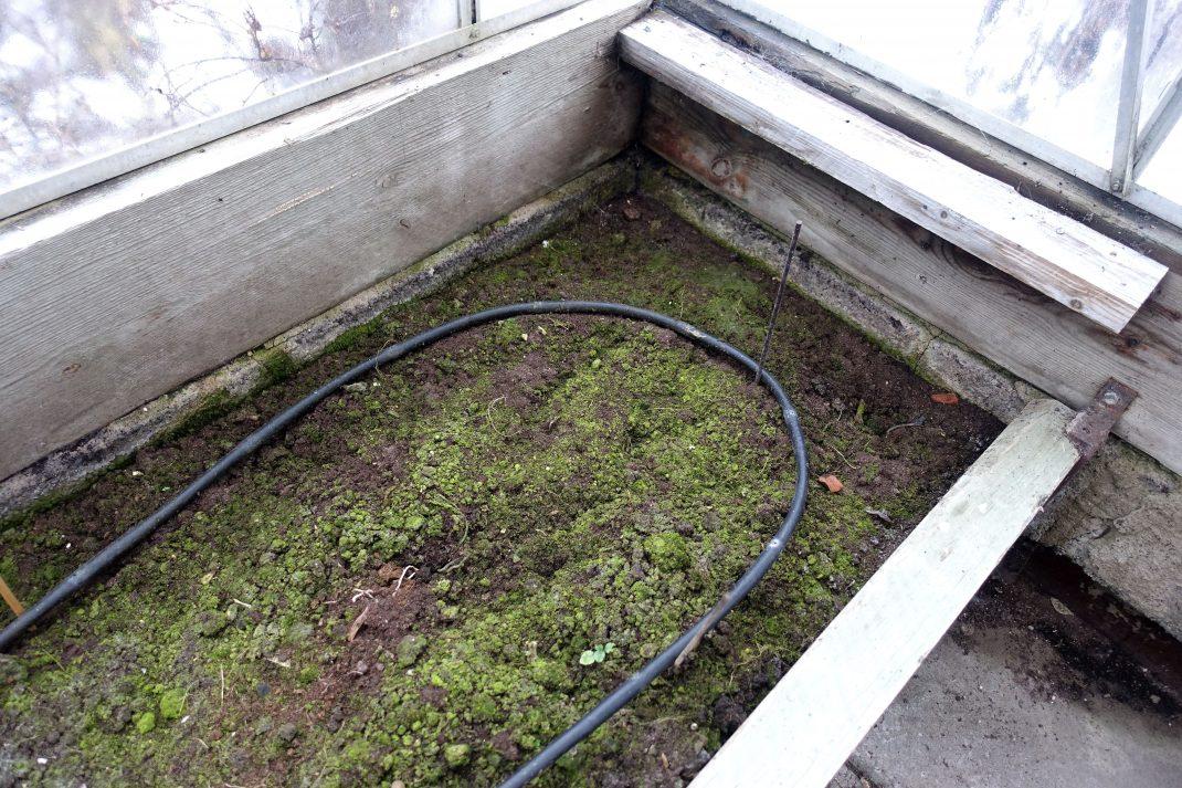 En odlingsbädd i växthus med lite mossa på.