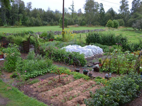Översikt av den frodiga odlingen i Skillnadens trädgård under sommaren.