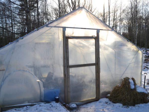 Tunnelväxthuset i ett vintrigt, soligt landskap.