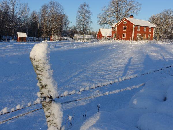 Vinterbild med stor beteshage täckt av snö och ett rött trähus i bakgrunden