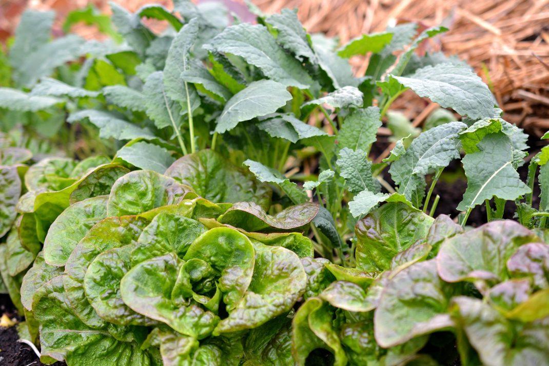 Bladgrönsaker i olika gröna färger.