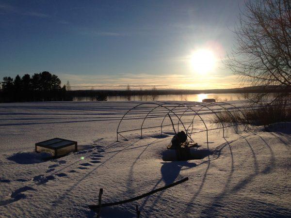 Snö ligger över marken i trädgården och solen står lågt på himlen.