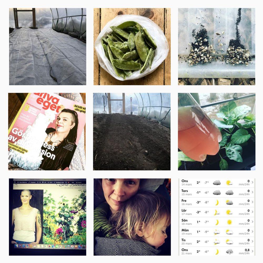 Ett kollage av nio bilder från Skillnadens Instagram-konot.