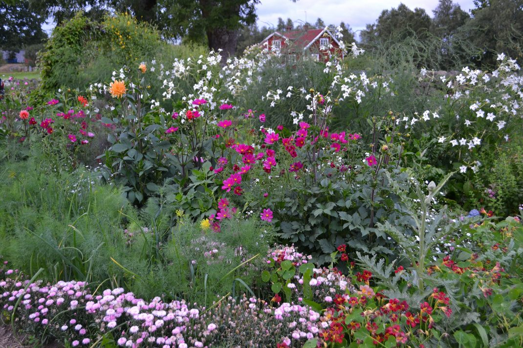 En bomstrande trädgård med höga sommarblommor i olika färger. Flower garden, a blooming garden full of flowers in different colors.