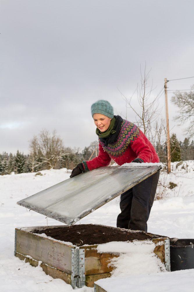 Sara lägger ett lock på en pallkrage i snöfylld trädgård.