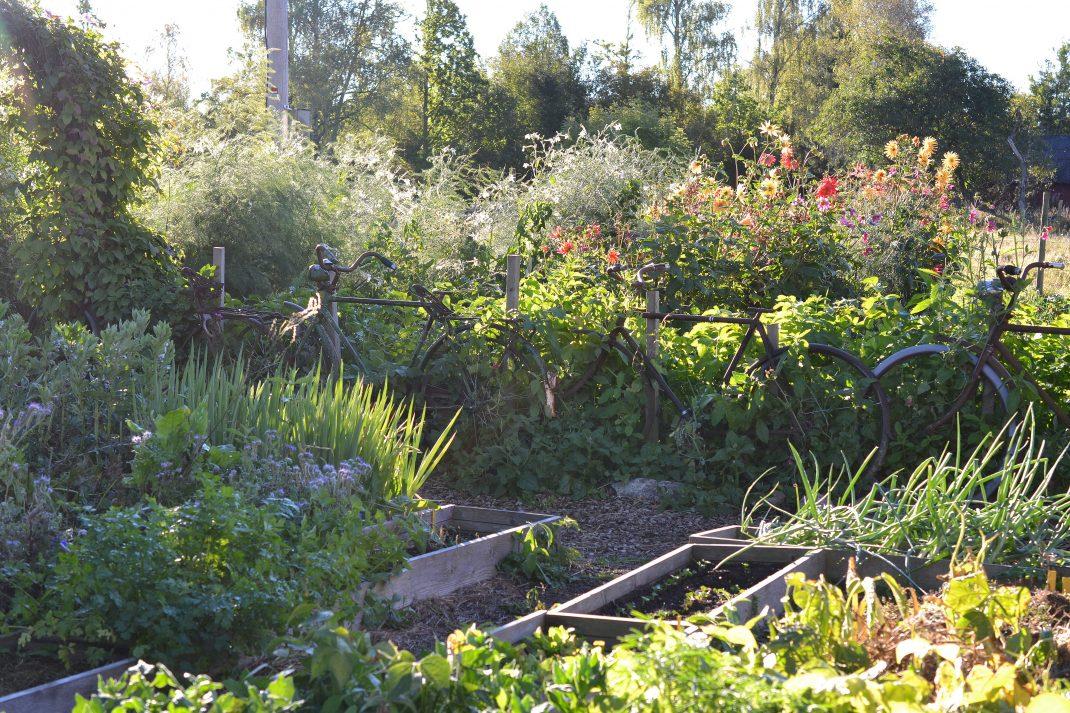 En blommande köksträdgård.