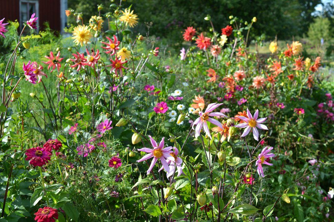 En sprakande bädd med färgglada blommor i olika former.