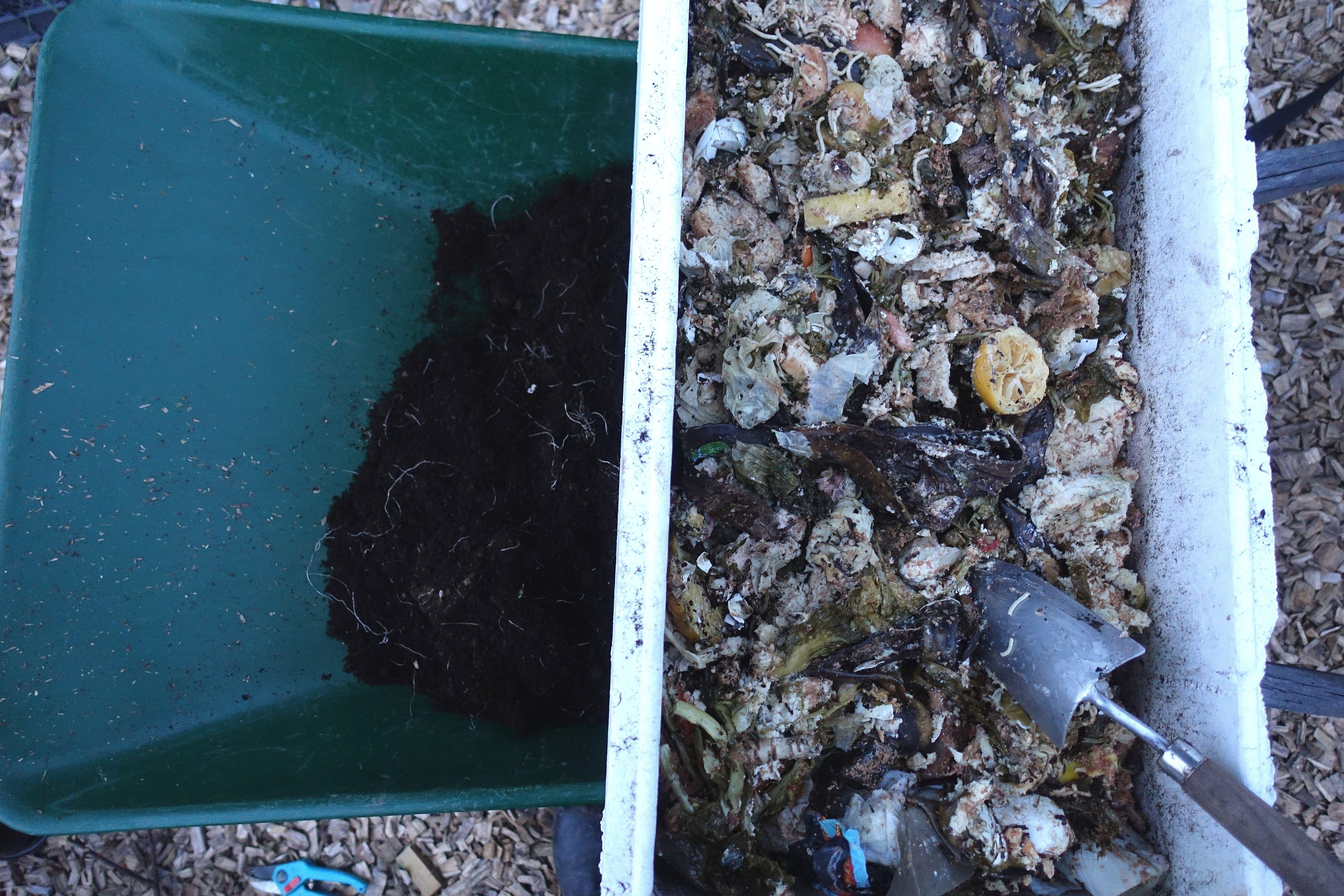 En skottkärra med frigolitlåda ovanpå och kompost i lådan.