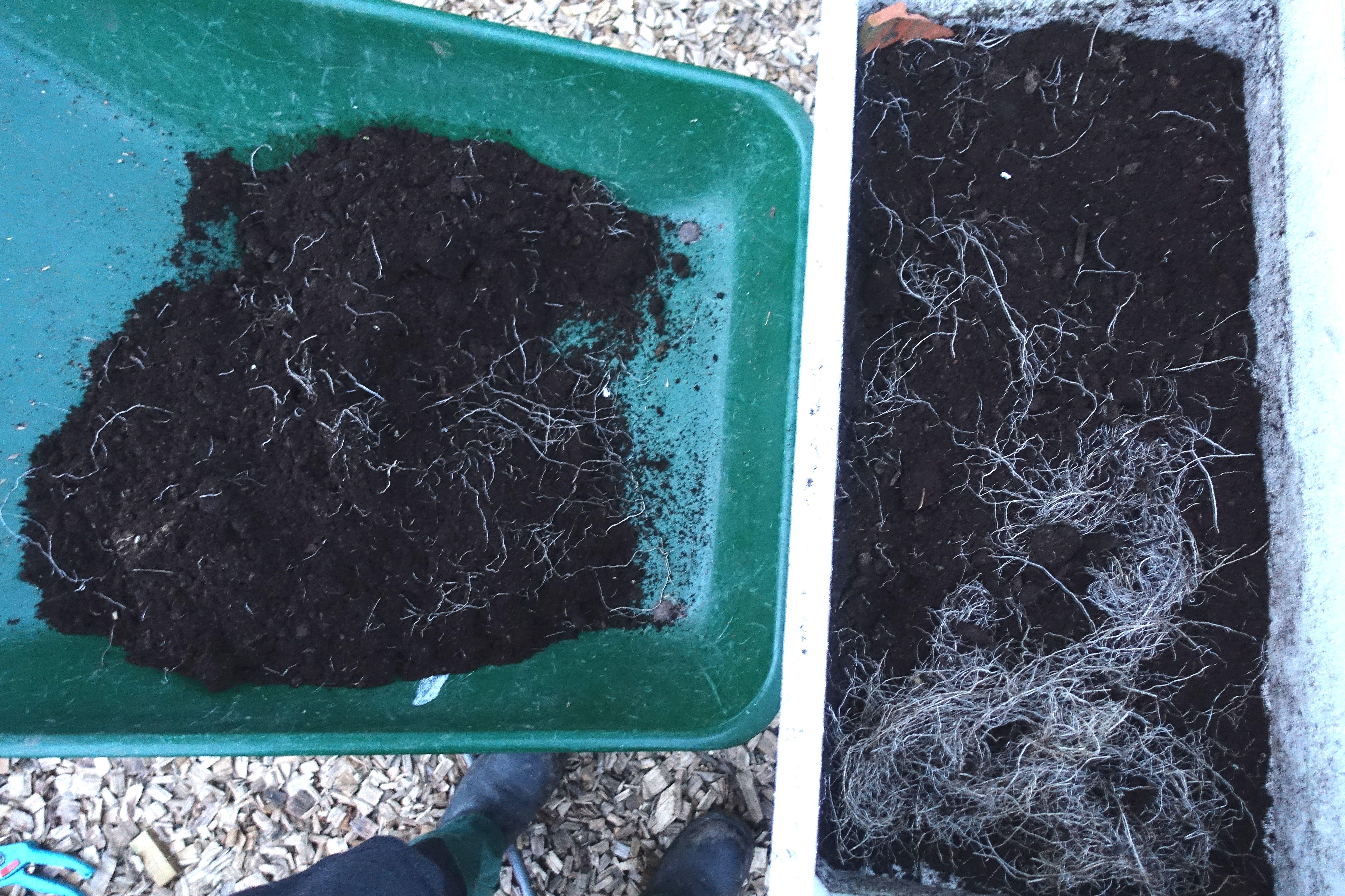 En frigolitlåda står på en skottkärra, med jord och växtmaterial i botten.