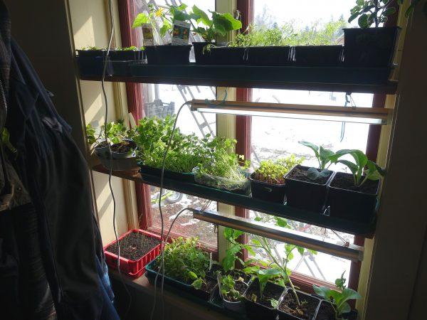 Ett välfyllt fönster med plantor och växtbelysning i en hall.