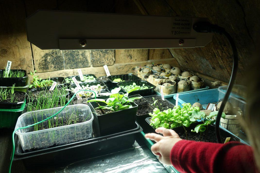 Ett litet barn sträcker in handen mot växterna under växtbelysningen.