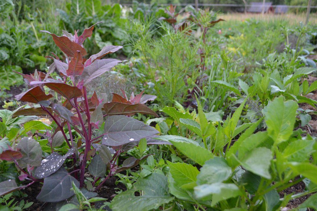 En plantering bara med gröna blad.