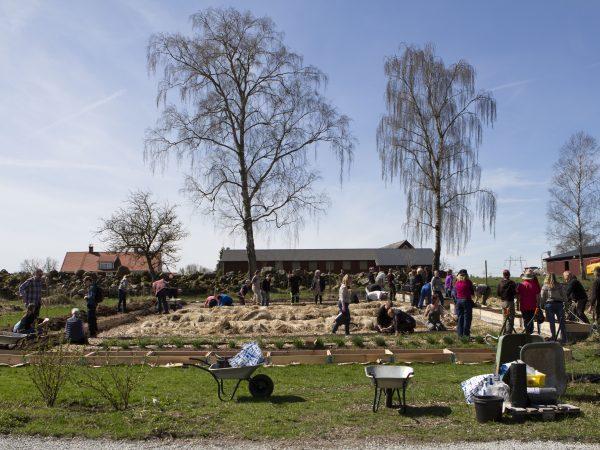Översiktsbild på Rinakby Gårds köksträdgård. Den ligger framför en stenmur och består mest av långa odlignsbäddar som är täckta av olika brunaktiga täckmaterial.