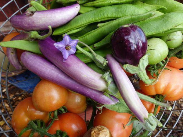 I en trådkorg ligger flera auberginer ovanpå gröna bönor och tomater.