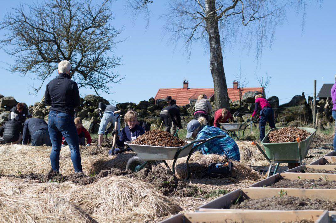 Bland de långa odlingsbäddarna i köksträdgården på Rinkaby gård rensar många kursdeltagare ogräs, gödslar och fyller på med flis.