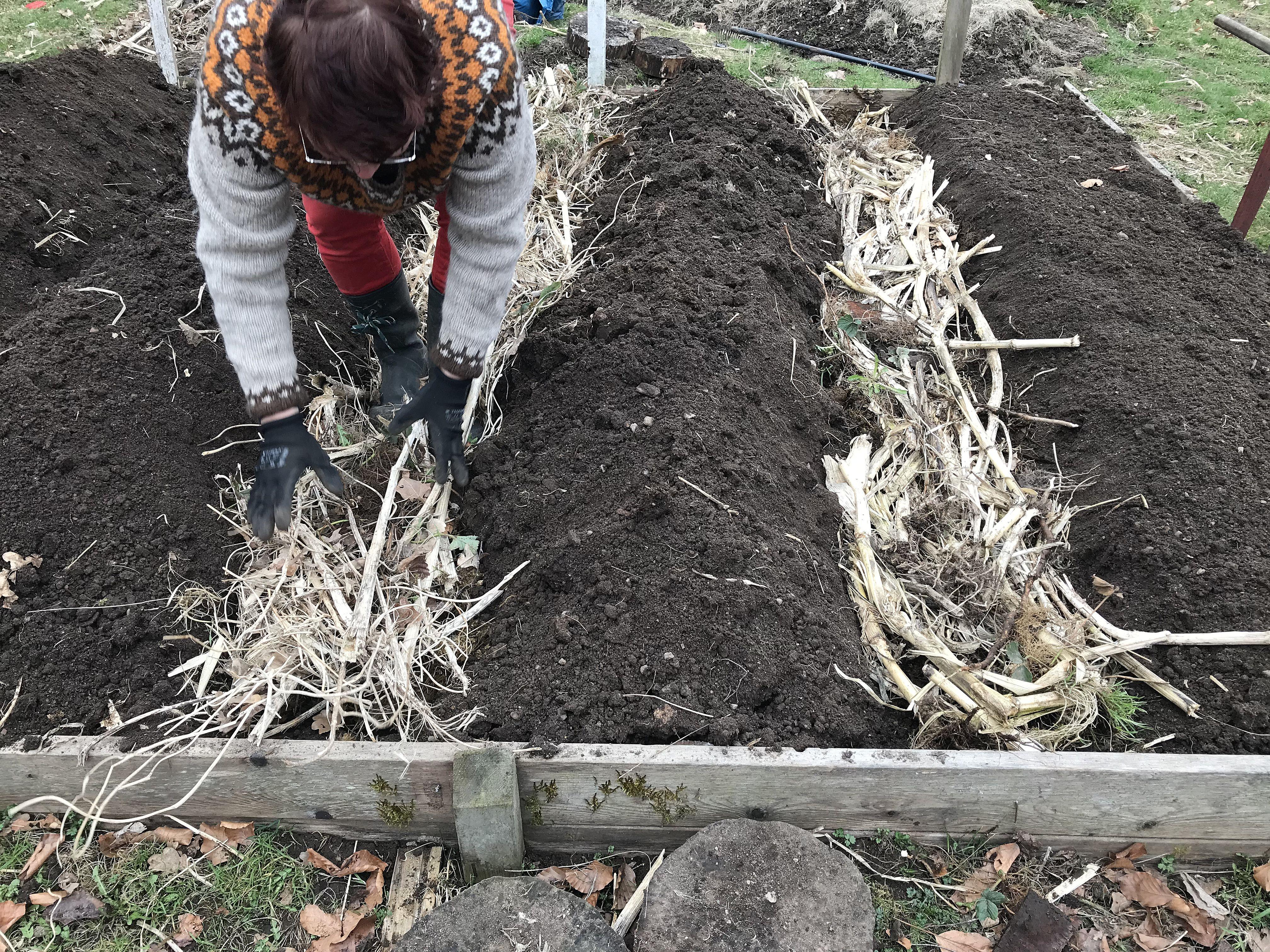 En kvinna står böjd över gångar mellan jordiga bäddar.