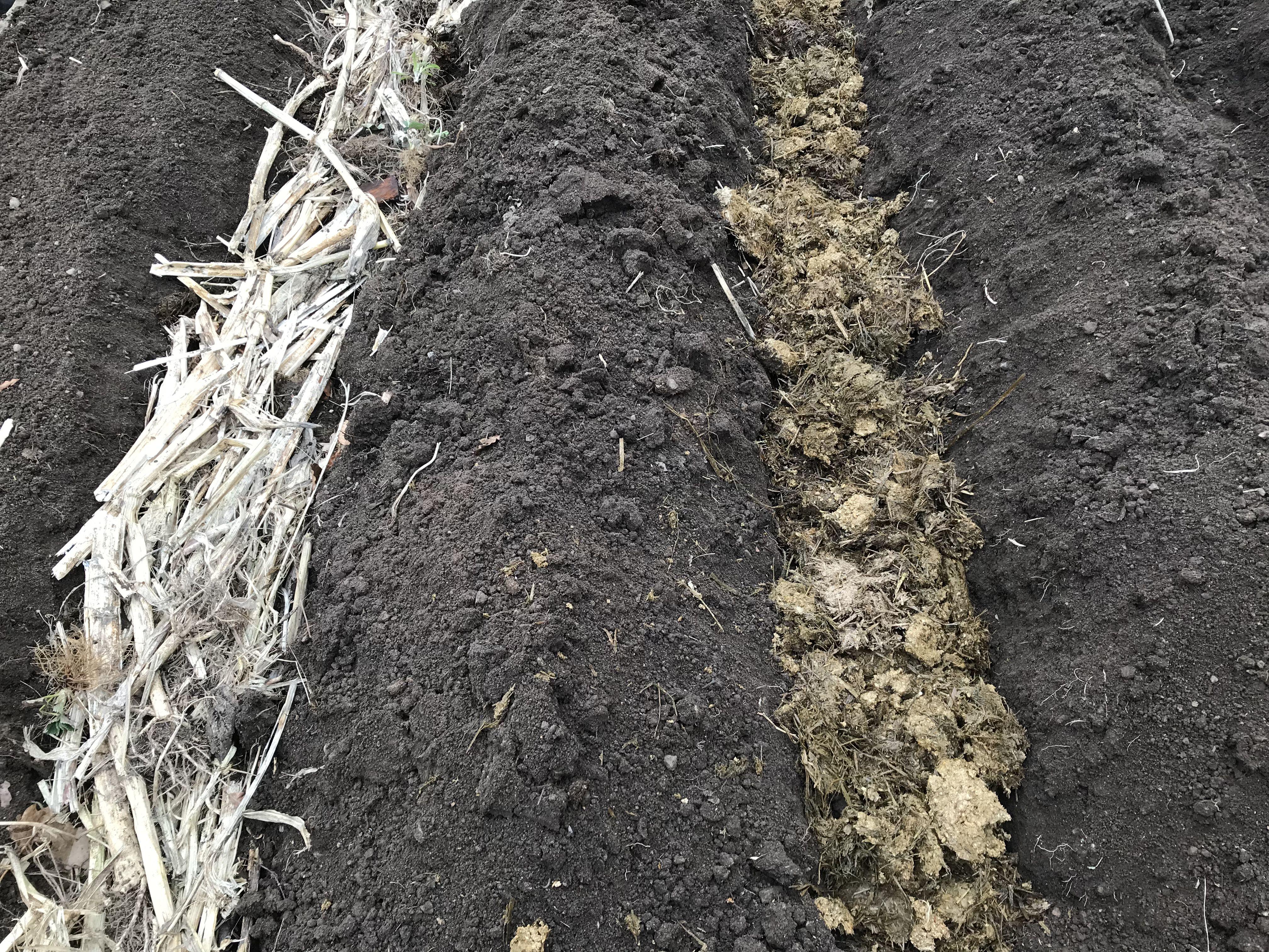 Närbild på odlingsbäddarna med gödsel och trädgårdsskräp i strängar mellan bäddarna.