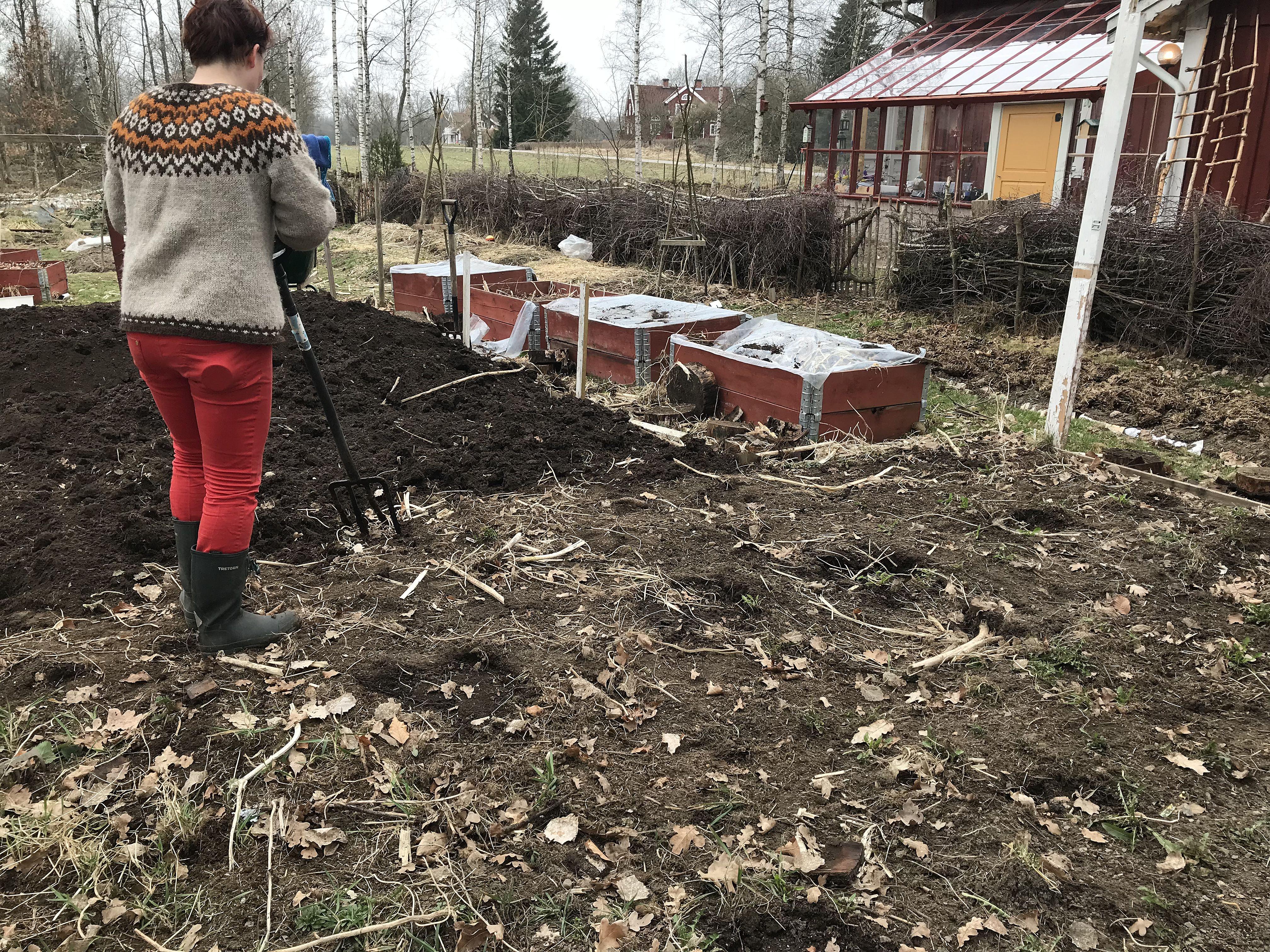 Ett köksträdgårdsland håller på att förberedas och rensas.