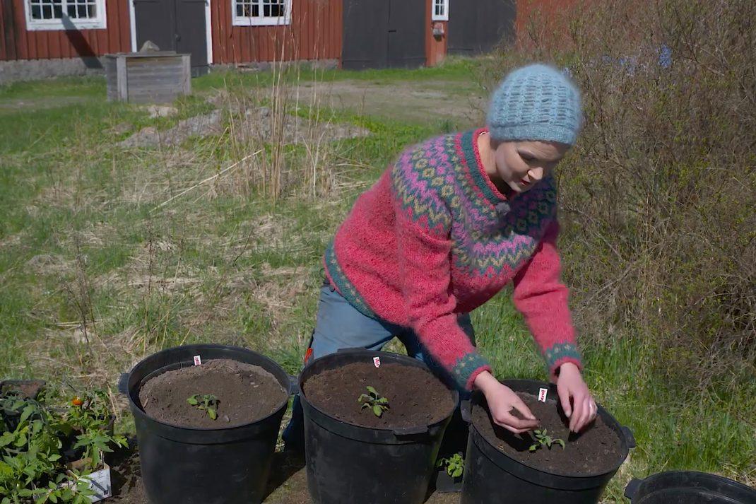 Sara sitter i solskenet utanför en lada och planterar i stora krukor.