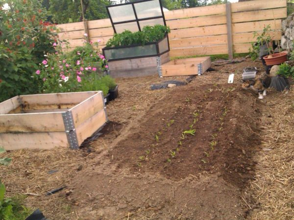 A raised bed with deep soil.
