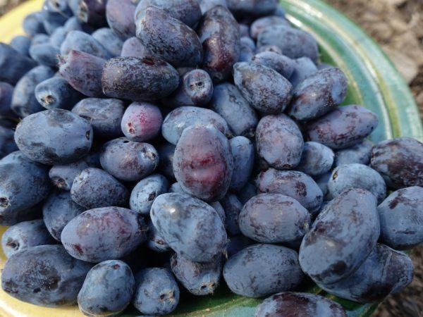 En överfylld keramikskål med blåbärstry.