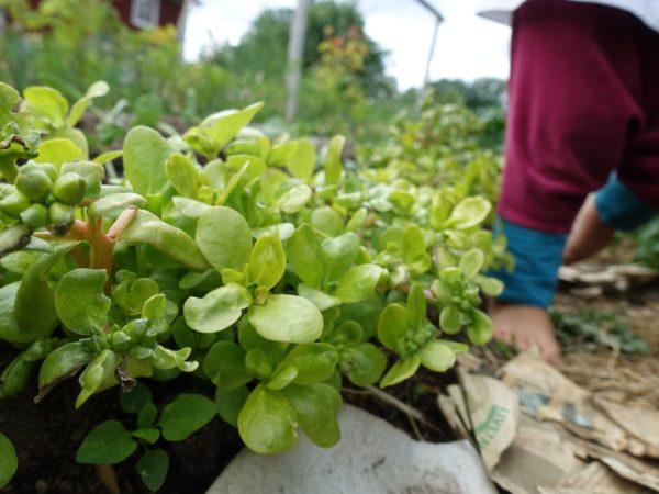En låg bild på gröna plantor och barnfötter.