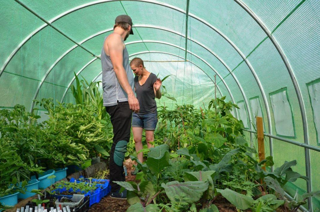 Johannes tittar på Sara, där de båda står inne i Saras gröna tunnelväxthus.