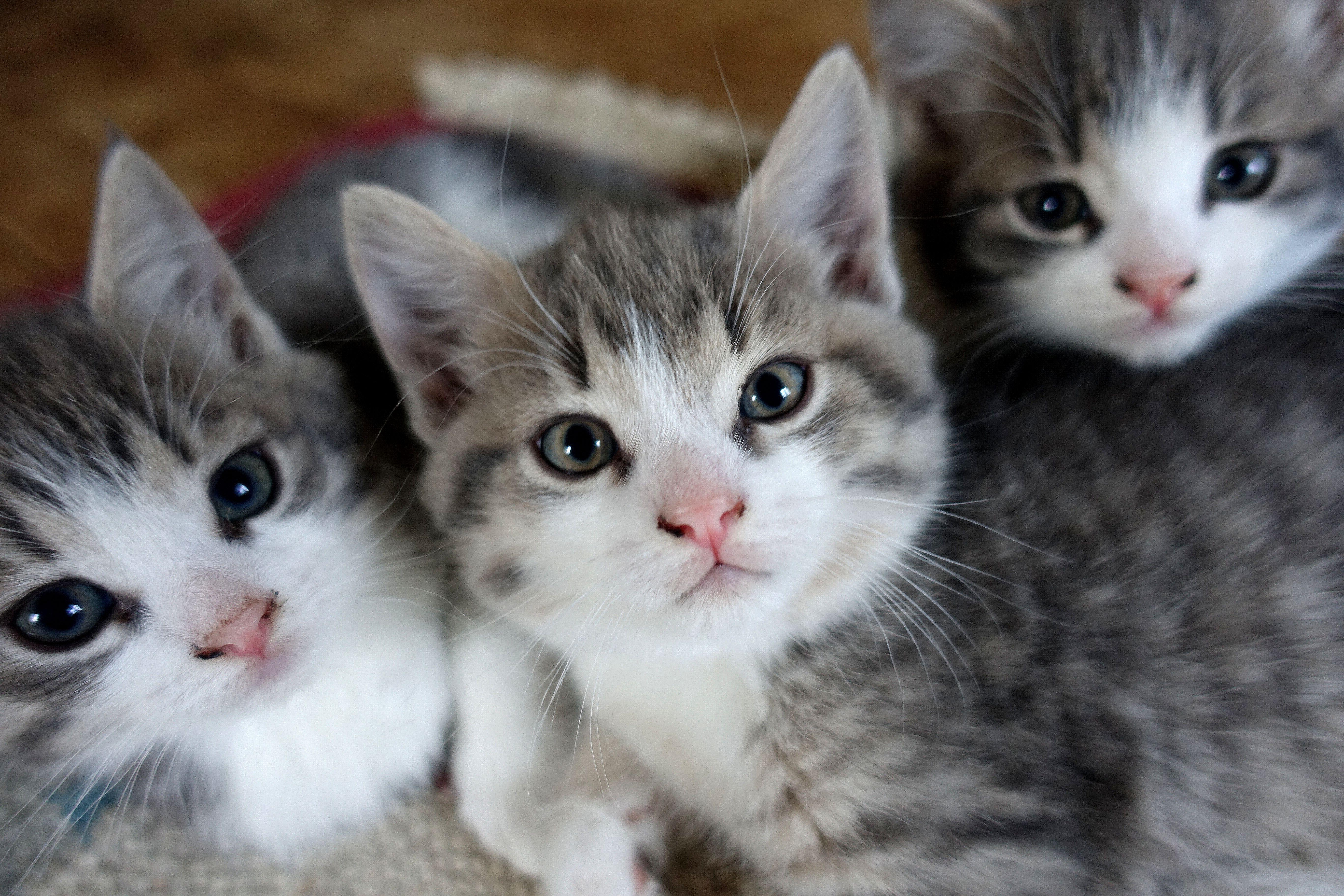 när kan kattungar börja äta