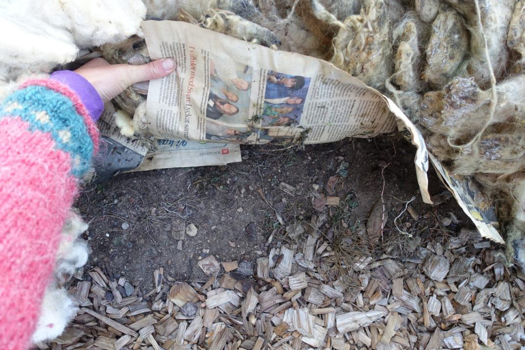 En arm med stickad tröja lyfter upp både tidningar och ull och visar jorden under.