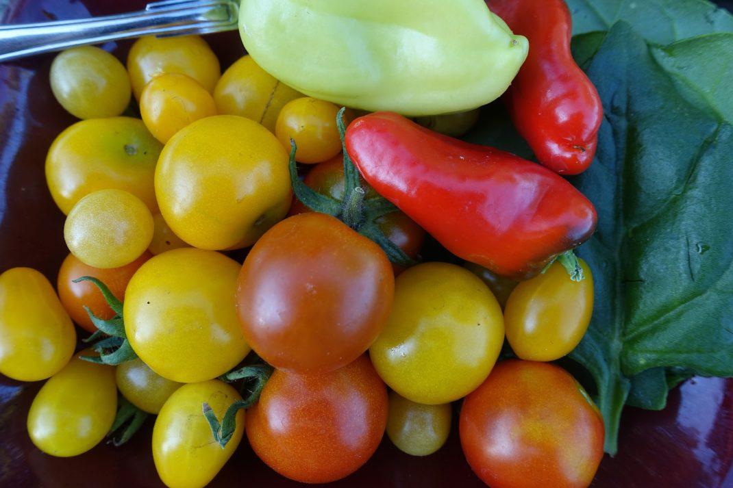 Ett fat med otroligt färgglada grönsaker bredvid varandra.