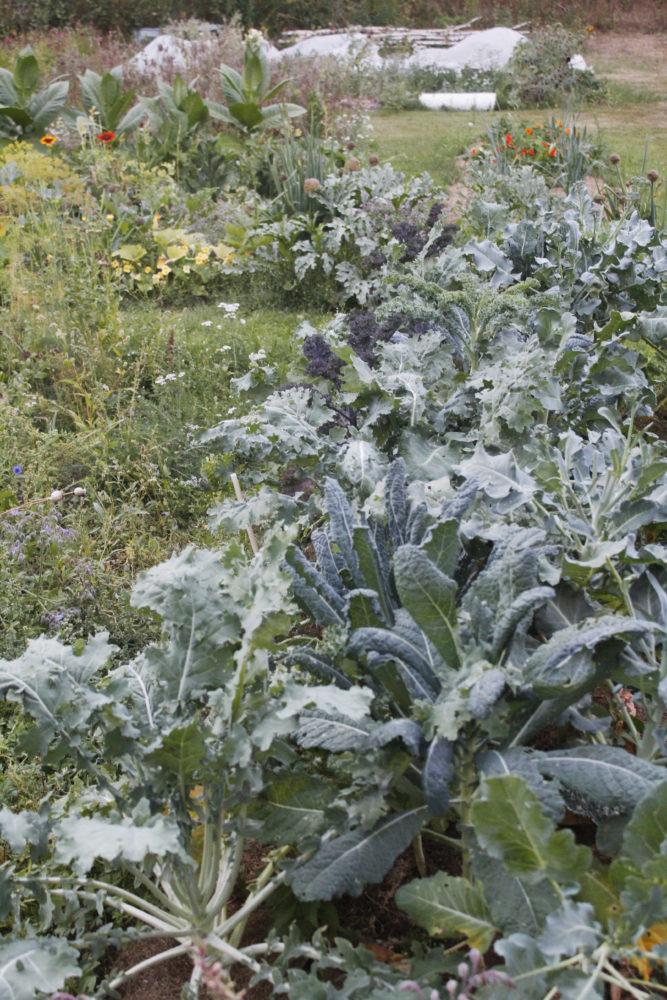 Bild av min köksträdgård.