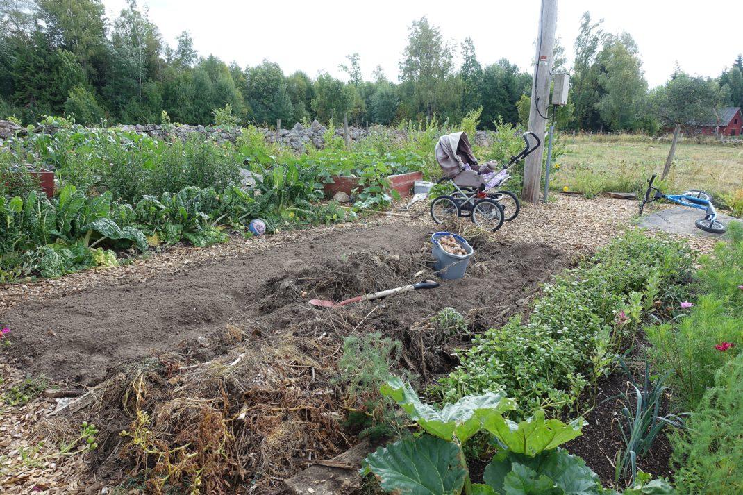 Bild på köksträdgården med odlingsbäddar i förgrunden och en barnvagn i bakgrunden.