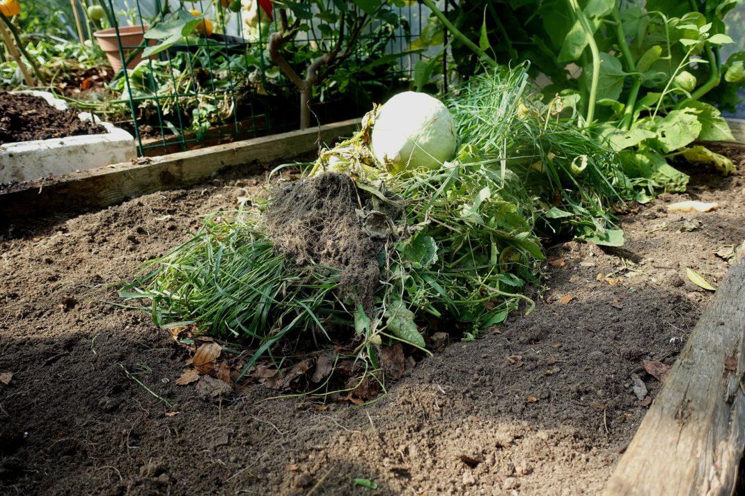 En bild på en odlingsbädd med jord och en hög med växtdelar i mitten.