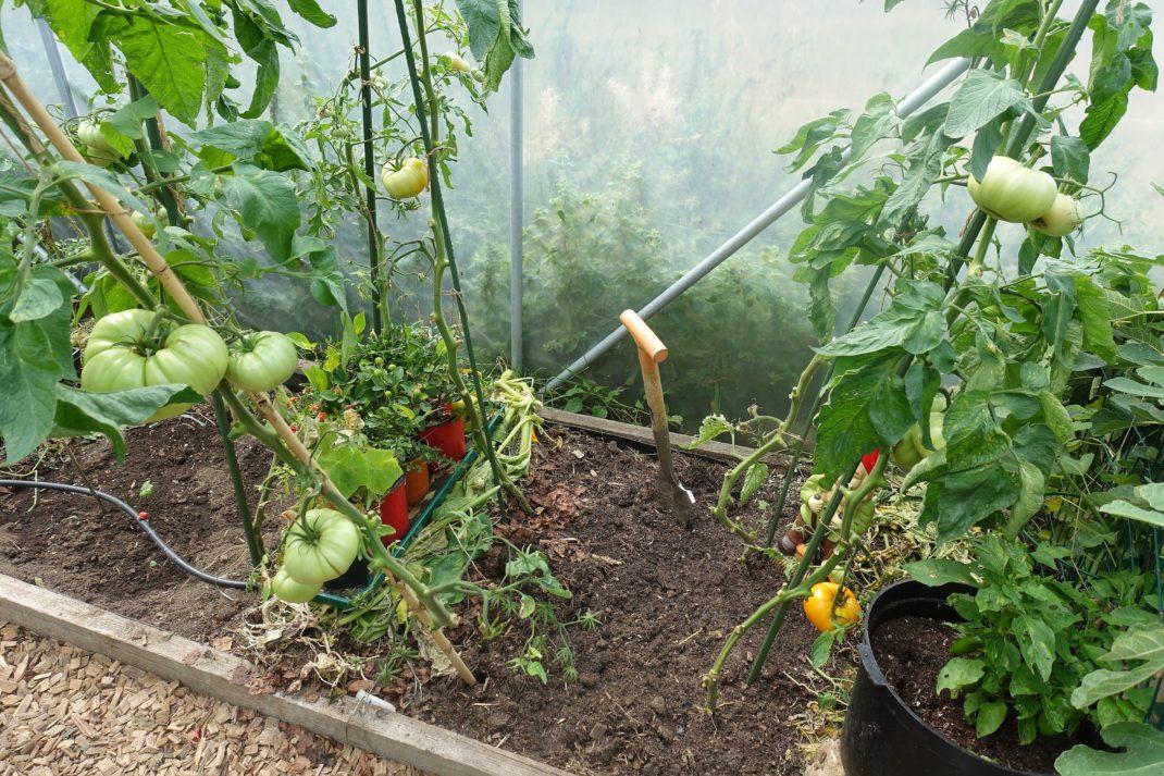 En odlingsplats sedd ovanifrån, med jord i bäddarna plus en del växtmaterial.
