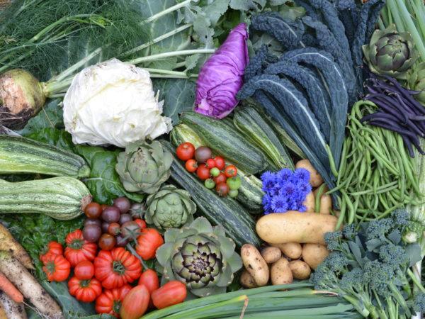 Närbild av vacker skörd av tomater, spetskål, svartkål, potatis med mera.