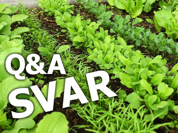 Texten Q and A SVAR står på en bild på små gröna blad i rader.