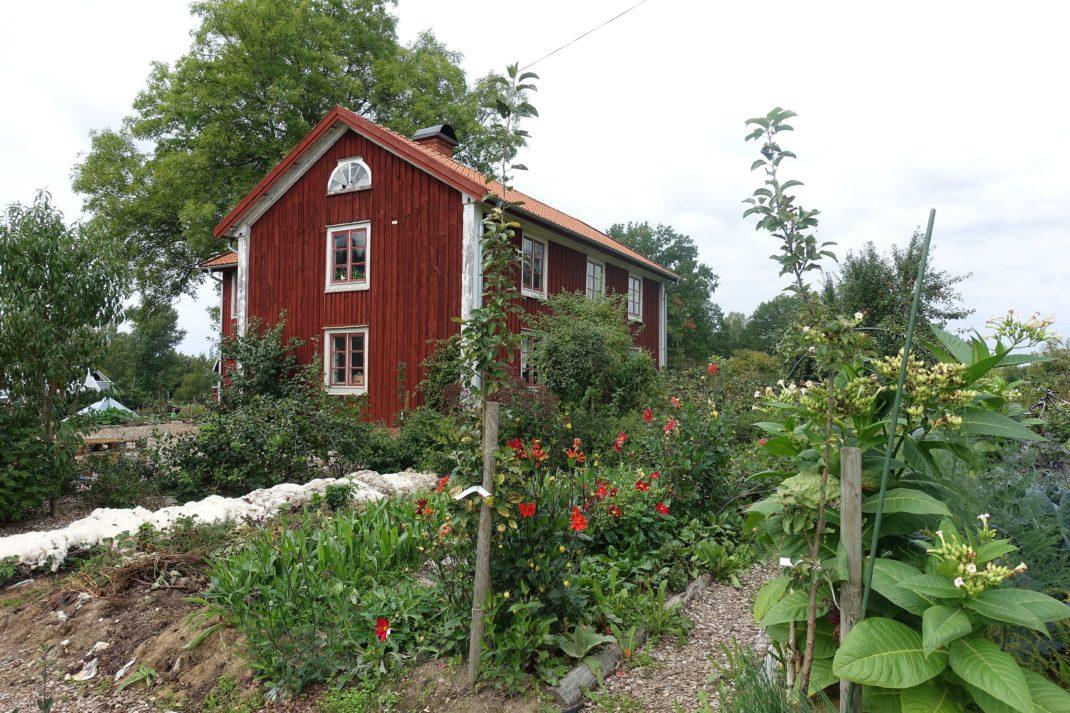 En bild på en prunkande köksträdgård, med två små äppelträd i förgrunden.