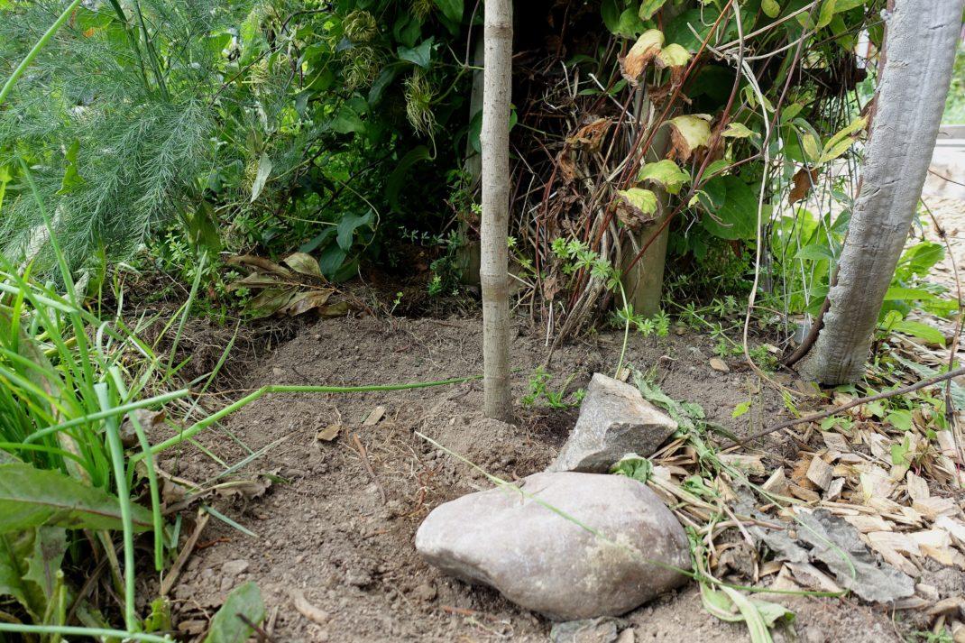 Bild på en klen trädstam som står i jorden, med gröna växter bakom.