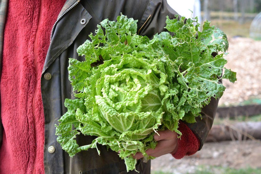 Sara håller en stor planta kinesisk salladskål under armen.
