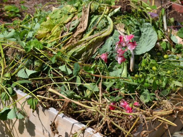 En pallkrage är proppfull med grönt växtrens och några rosa blommor.