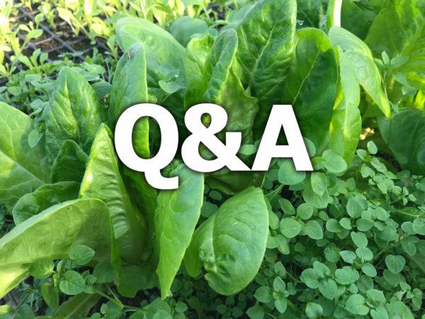 Texten q&a står på en bild av sallad och små gröna blad.
