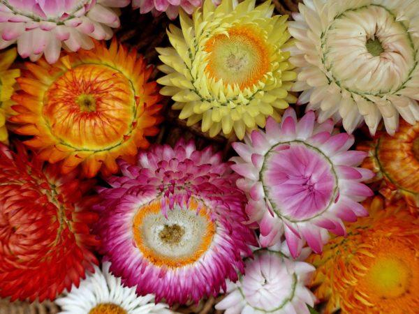 Ett fat med färgglada vackra blommor bredvid varandra.
