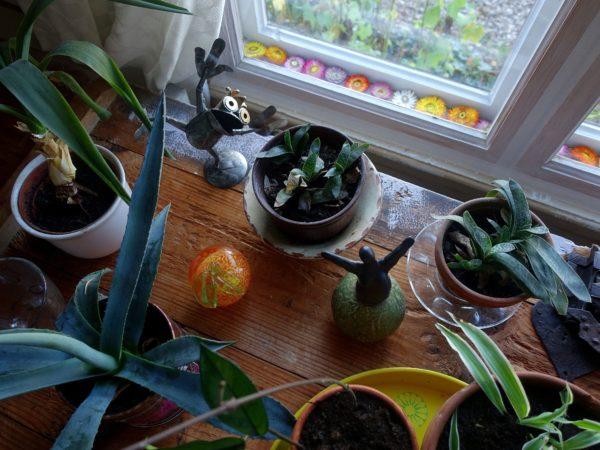 Ett bord med blommor framför ett fönster. Mellan fönsterbågarna ligger färgglada blommor.