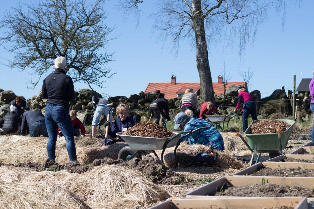 Människor jobbar i en trädgård på våren.