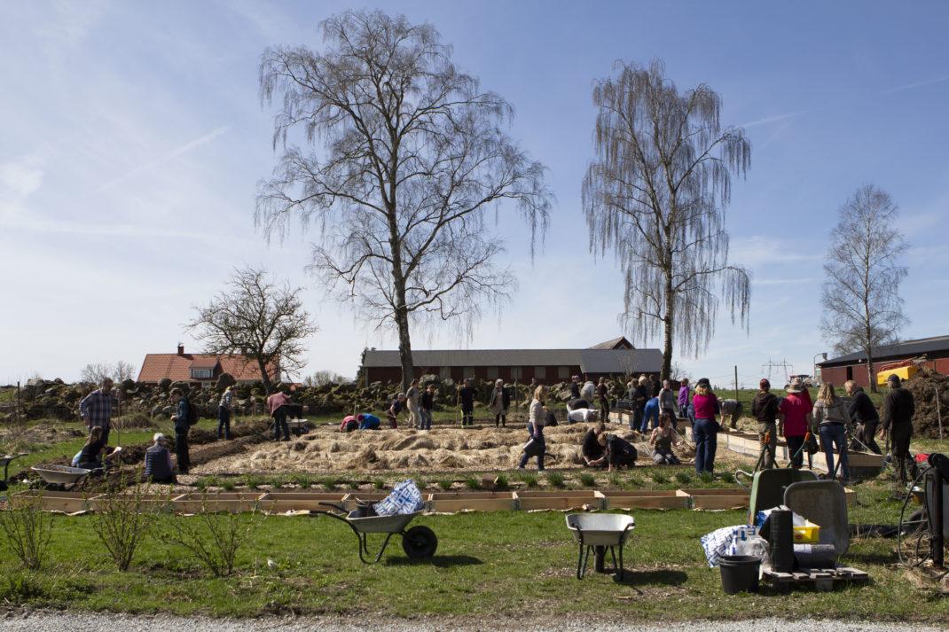 En stor köksträdgård där många människor jobbar samtidigt.