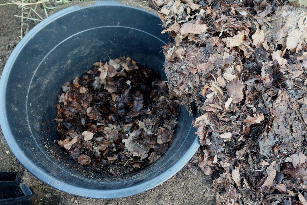 Närbild på den svarta krukan med löv i botten.