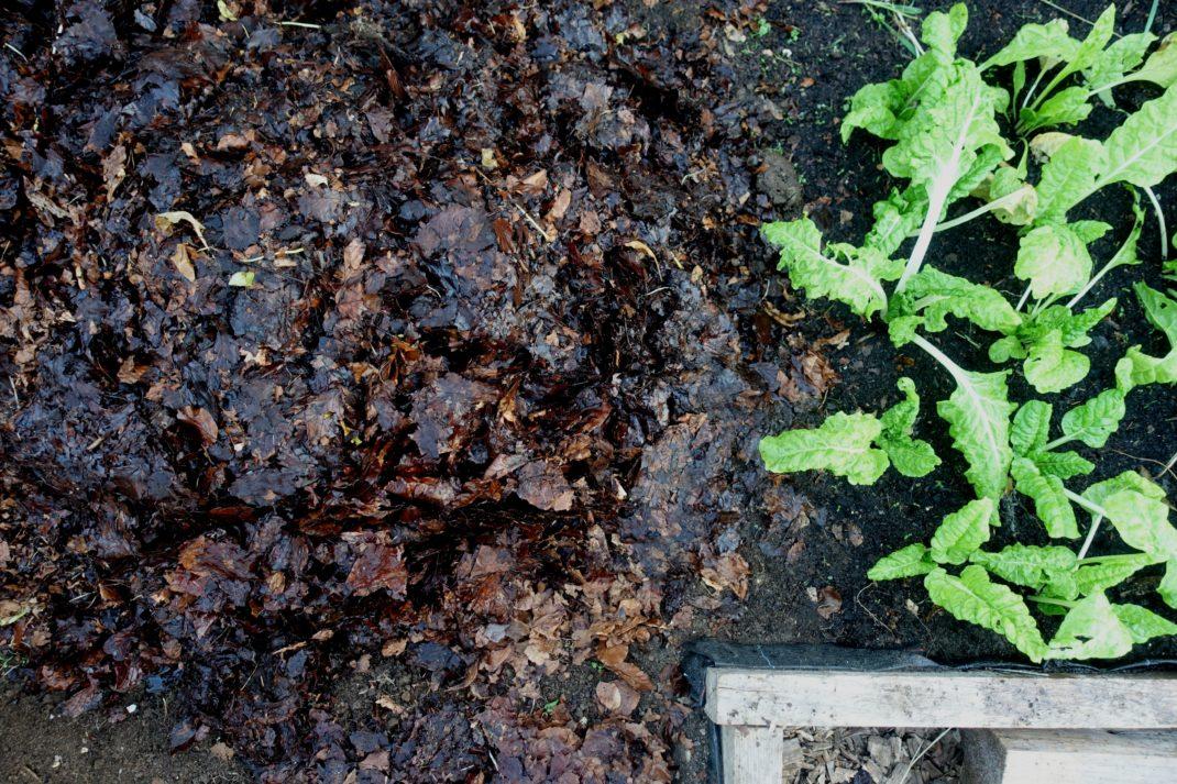 En lövhög på marken i ett tunnelväxthus.