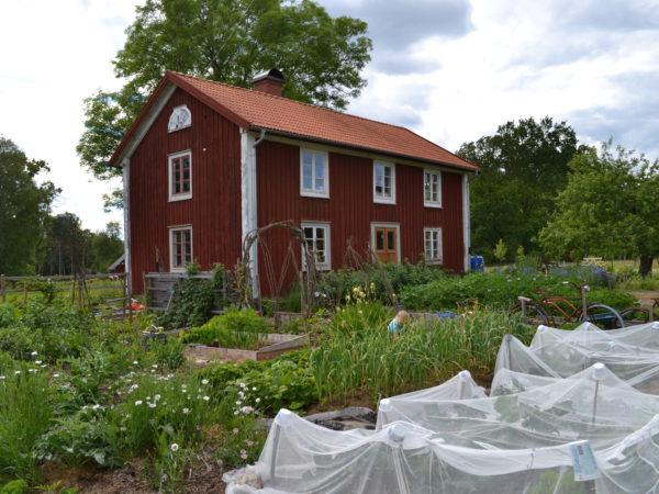 Huset Skillanden mitt i prunkande köksträdgård 2014.