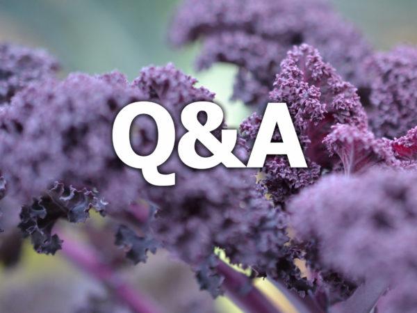 Texten q&a står ovanpå en bild av lila grönkål.