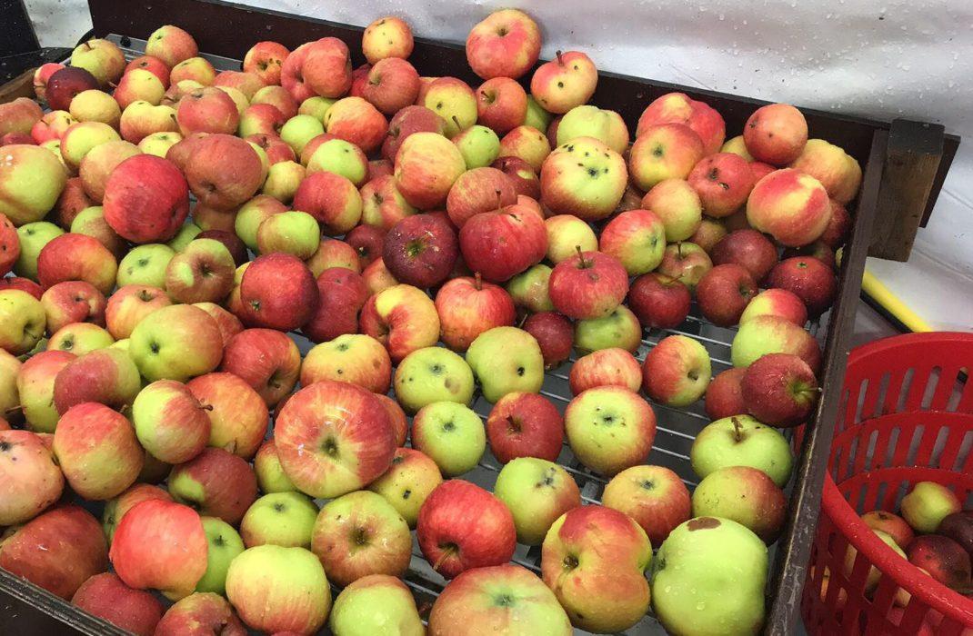 Ett galler med färska äpplen på.
